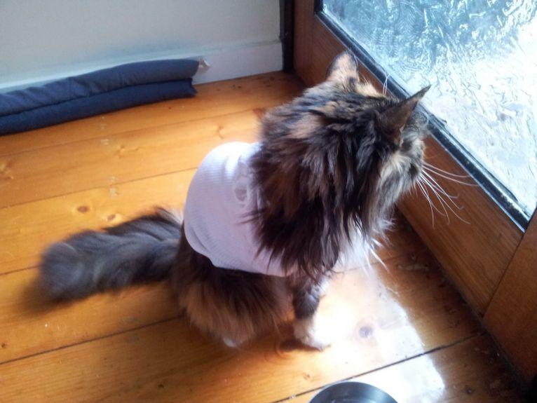 where is that pesky cat from next door?