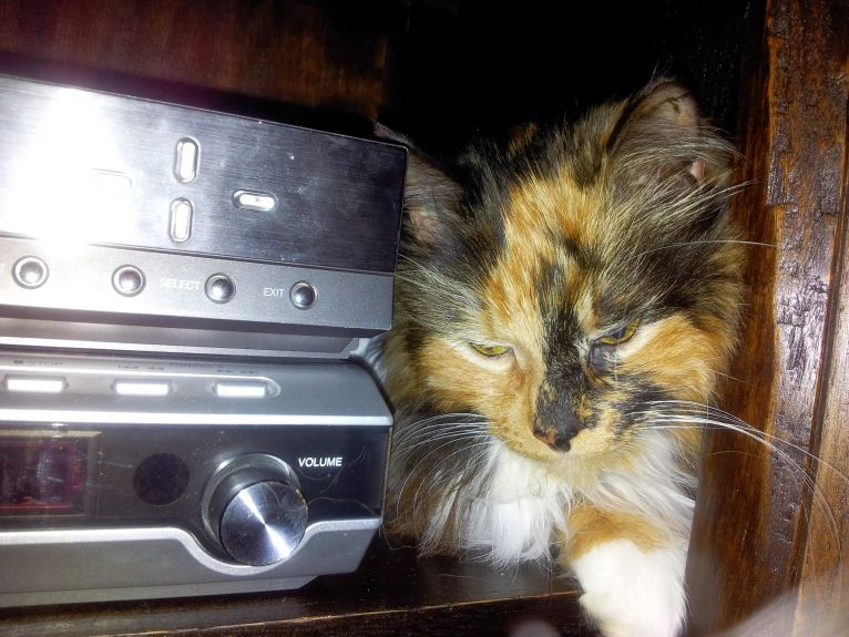 a fave spot pre-surgery - up close and personal with the hifi in the cupboard