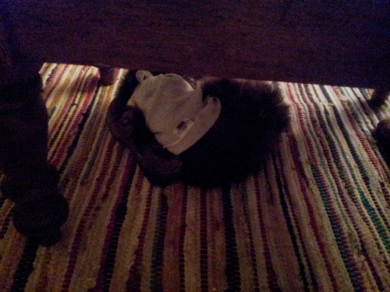 under the coffee table snuggling my shoe