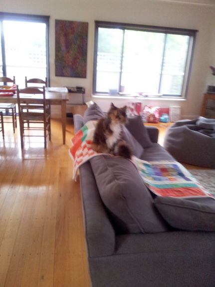 I'm on the quilt, but would love to claw that couch...